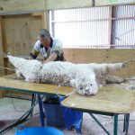Shearing-A