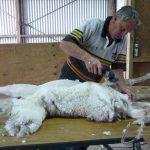 Shearing-B