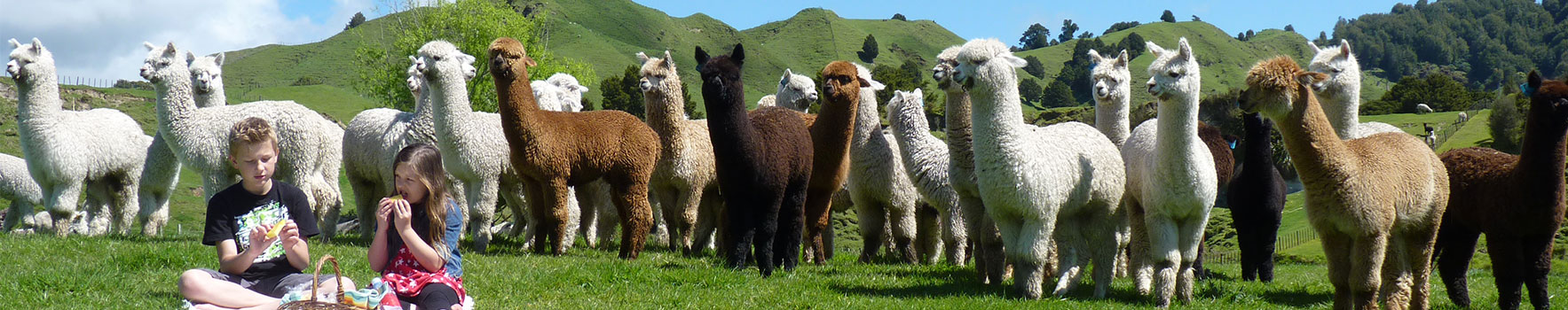 Enjoying-an-Alpaca-Picnic