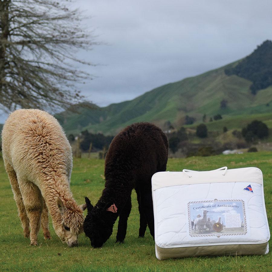 Alpaca Duvet New Zealand Grown Alpaca Nevalea Alpacas