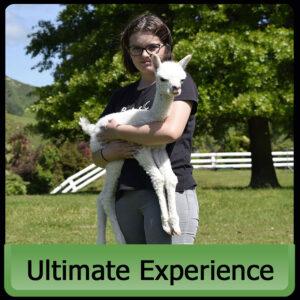 Ultimate Alpaca Experience